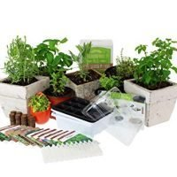 Culinary Indoor Herb Garden Starter Kit